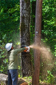 acworth tree removal