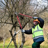 tree trimming acworth